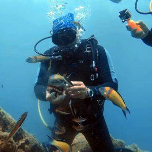 Discover-Dive-en
